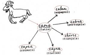 capra.jpg