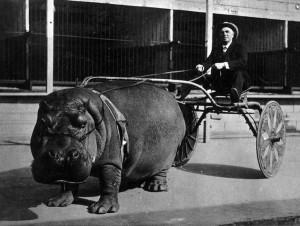 hippo cart 1924