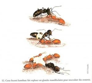 ant explode