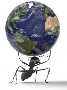 ant holding world