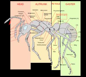 ant parts