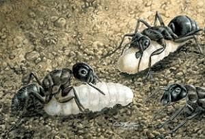 ants-3450