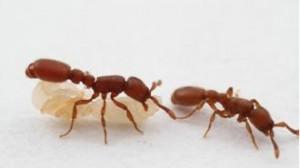 ants2--330x185
