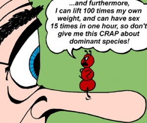 dom species