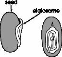 passage_246_v11_Graphic1_pngalpha