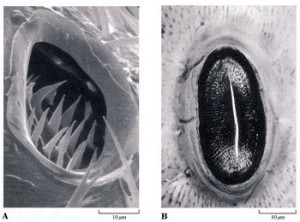 trachealsystems.2