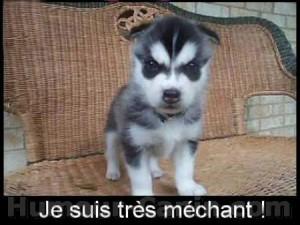 big_9154-chien-mechant