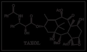 Sketch-Taxol