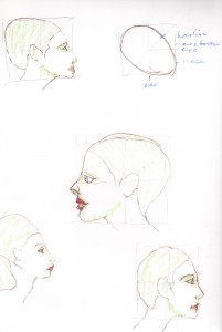 head proportions woman