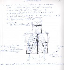 rib cage sternum boxes