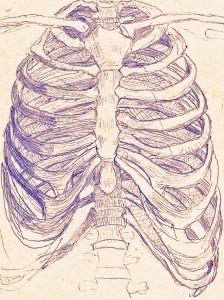 rib cage structure