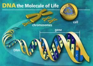 molecule of life