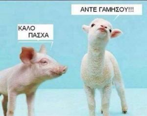 poor lamb