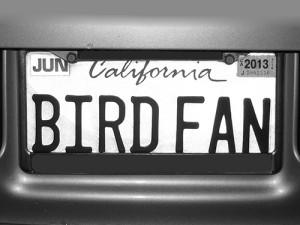 Bird_Fan_-_Max_Clarke