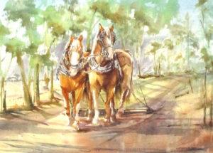 Equine- Horses