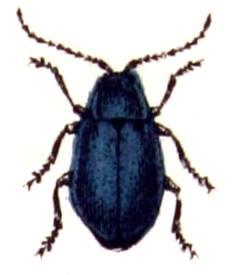 beetle-wc