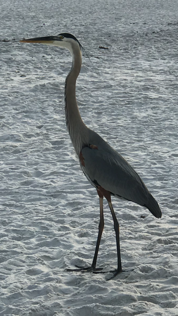 Image of Crane on Beach