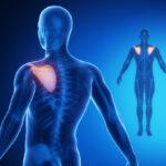 Injury blog: Winging of the shoulder blades