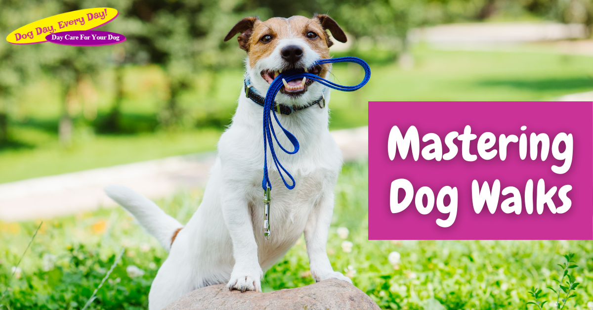 Mastering Dog Walks