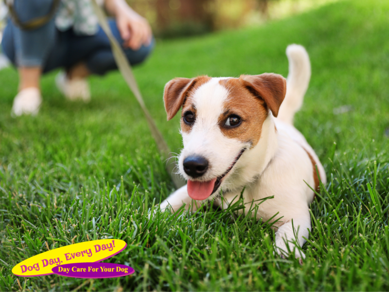 Tips To Protect Your Dog From Rabies