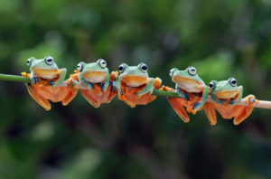 Frogs – Biological Indicators of the Health of the Environment