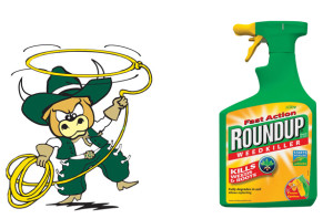 round-up-bull