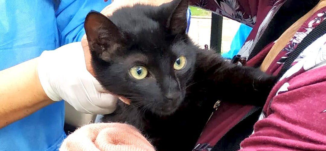 Todos los estratos socioeconómicos podrán acceder a esterilizaciones públicas de gatos y perros, con gratuidad y costo diferencial
