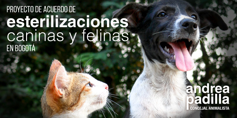 Socialización con la comunidad del proyecto de acuerdo de esterilización de gatos y perros en Bogotá