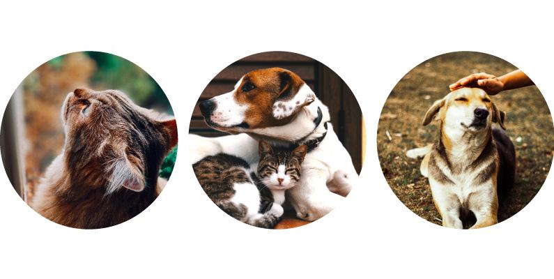 ¡Organicémonos y conformemos nuestras redes de hogares de paso de gatos y perros en Bogotá!