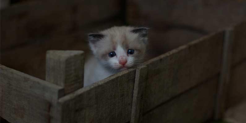 Indignación positiva por el maltrato animal