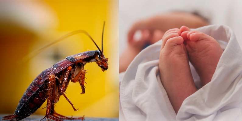 La cucaracha y el bebé