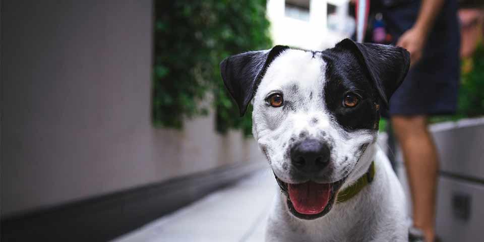 Ya puede descargar un formato de acción de tutela para proteger su derecho a convivir con animales de compañía