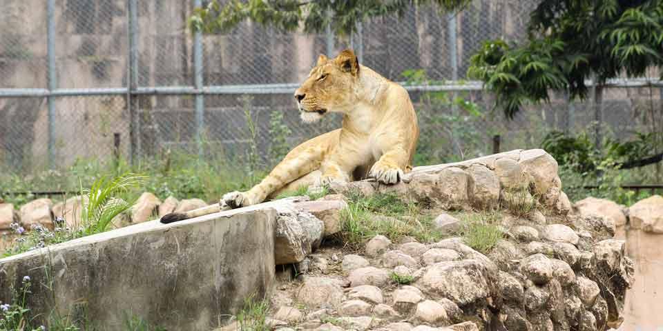 A partir del 1 de mayo, miles de animales albergados en zoológicos y acuarios del país podrían quedar sin alimento
