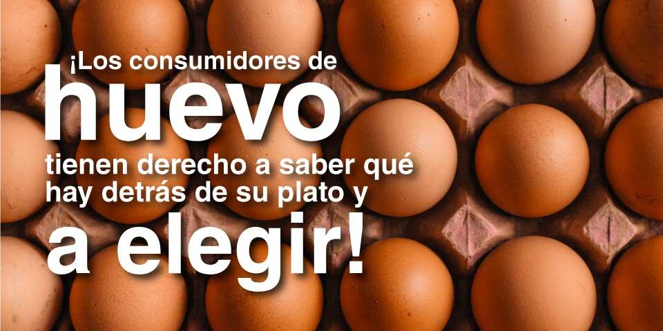 Proyecto de Ley para garantizarles a los consumidores de huevos el acceso a la información sobre los sistemas de crianza de las gallinas