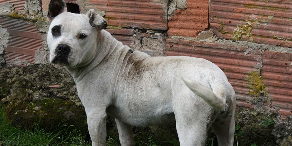 158 perros y gatos que vivían en CAIs fueron auxiliados por  la ciudadanía y protegidos de los disturbios