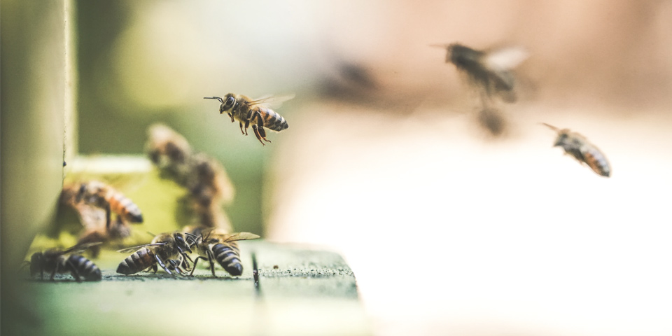 Mesa interinstitucional en favor de las abejas   Marzo y abril 2021