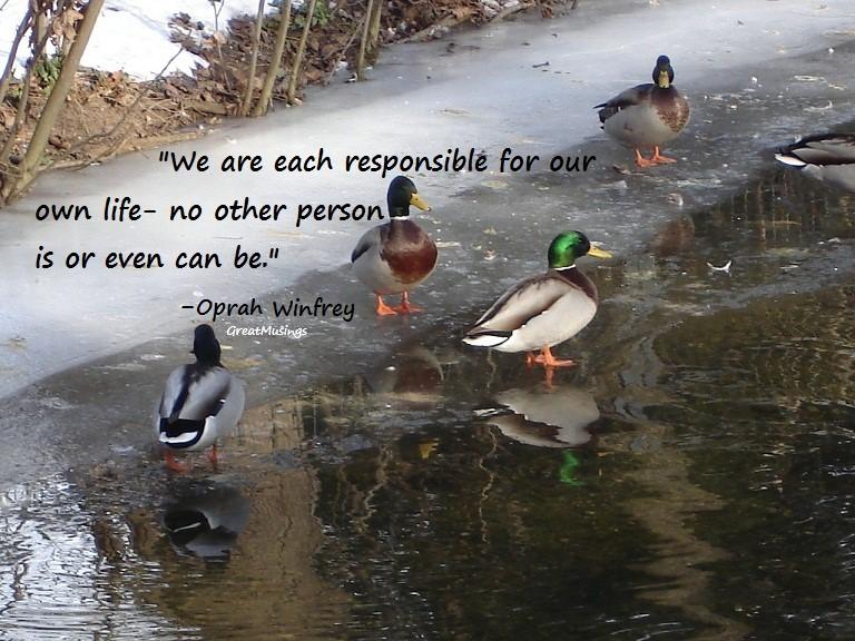 quote by Oprah Winfrey on ducks pic