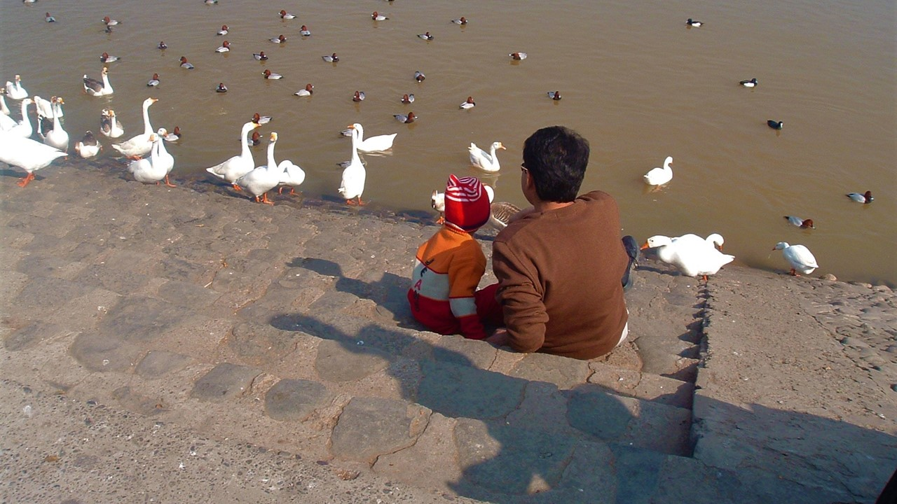 Father son sitting by the side of the lake with ducks.