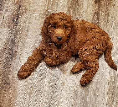 a new puppy in my house