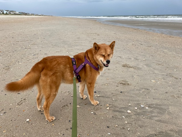 Why I stay fit Peanut on the beach