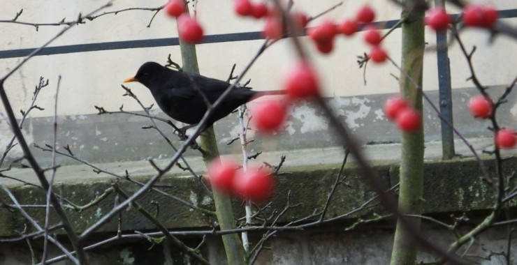 Птица странствий.