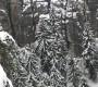 Деревья в снегу. Саксонская Швейцария. Германия.