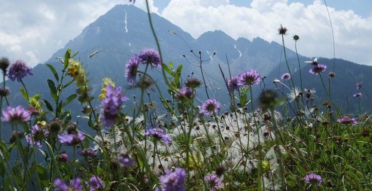 Тироль. Горы. Луга и цветы.