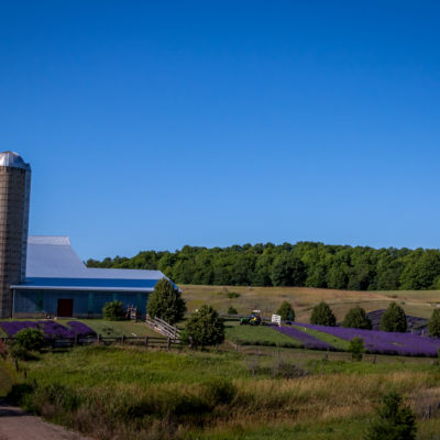 lavendar hill farm (1 of 1)