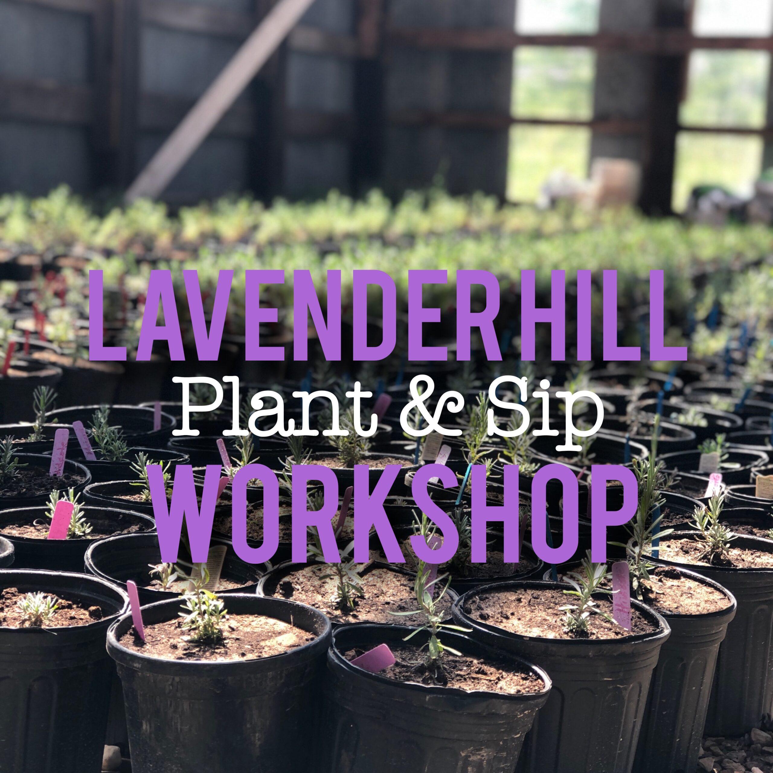 Lavender Hill Plant & Sip Workshop