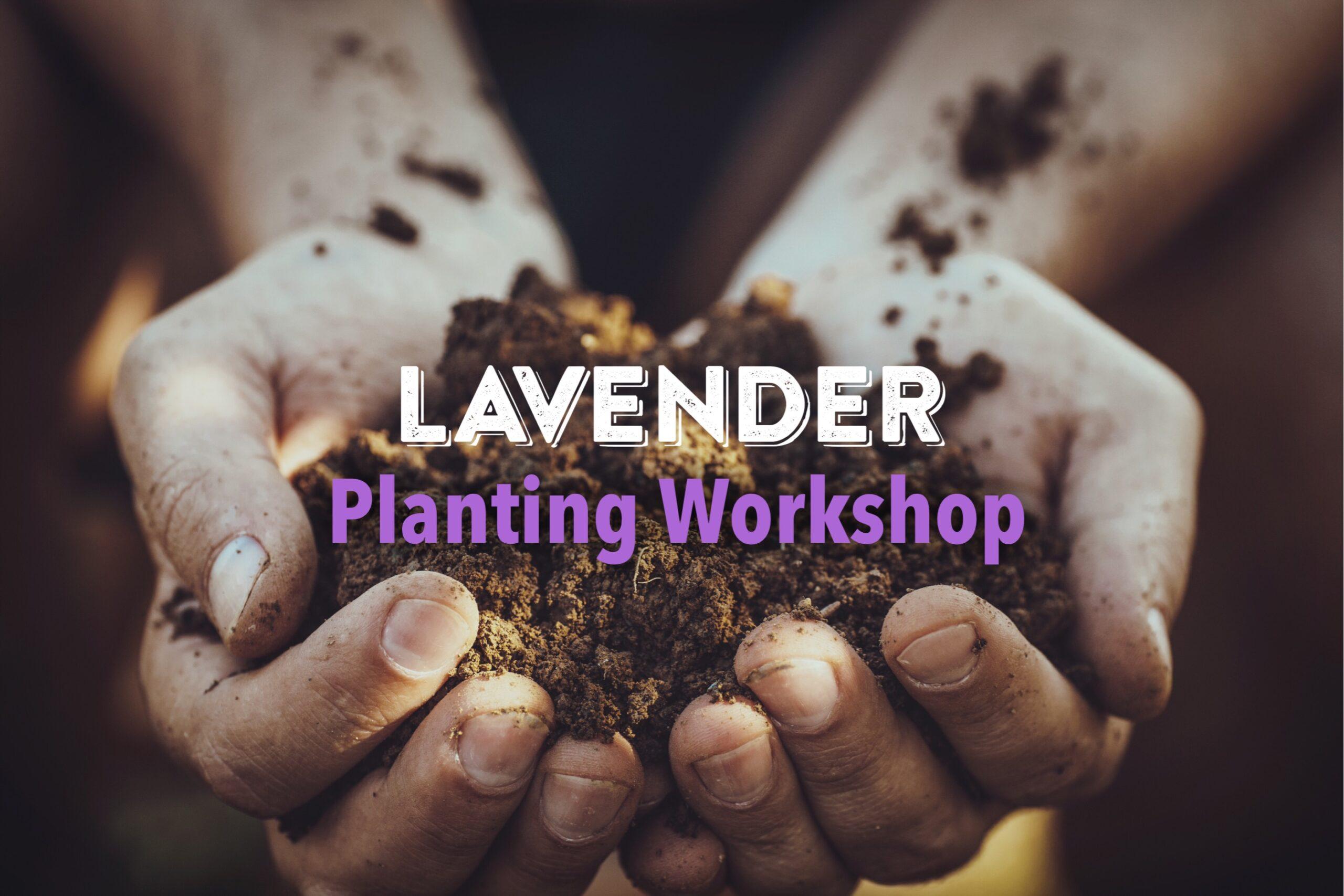 Lavender Planting Workshop