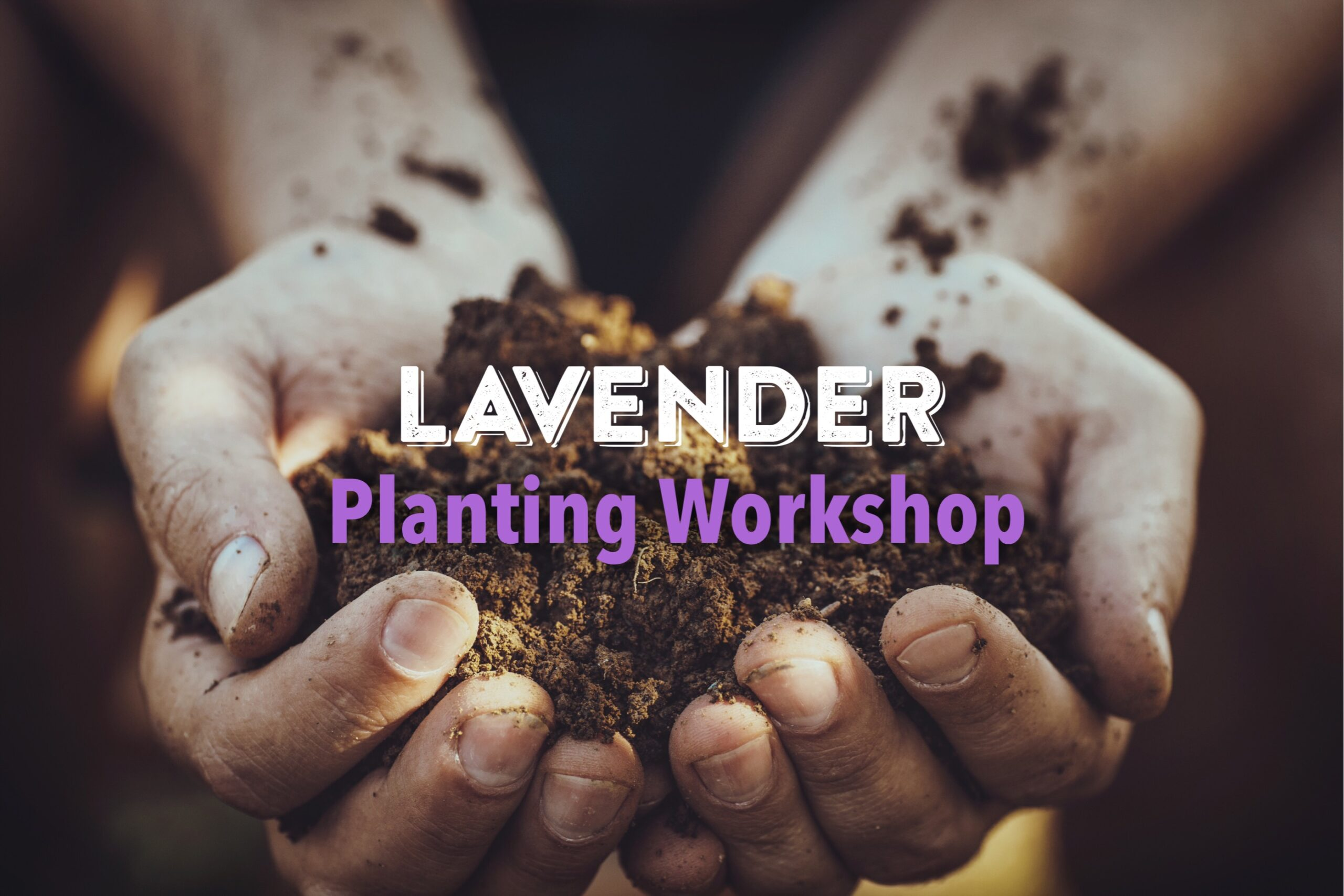 Lavender Planting Workshop