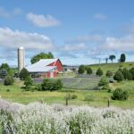 Top 5 Things To Do at the Farm