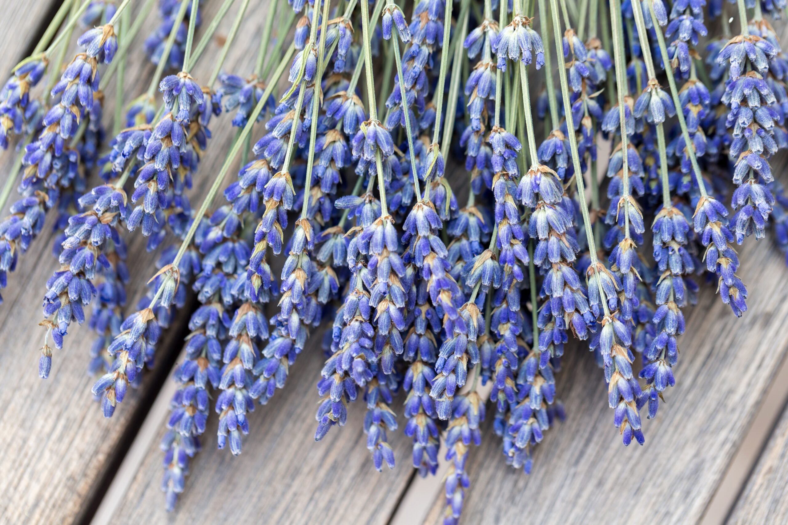 National Lavender Day