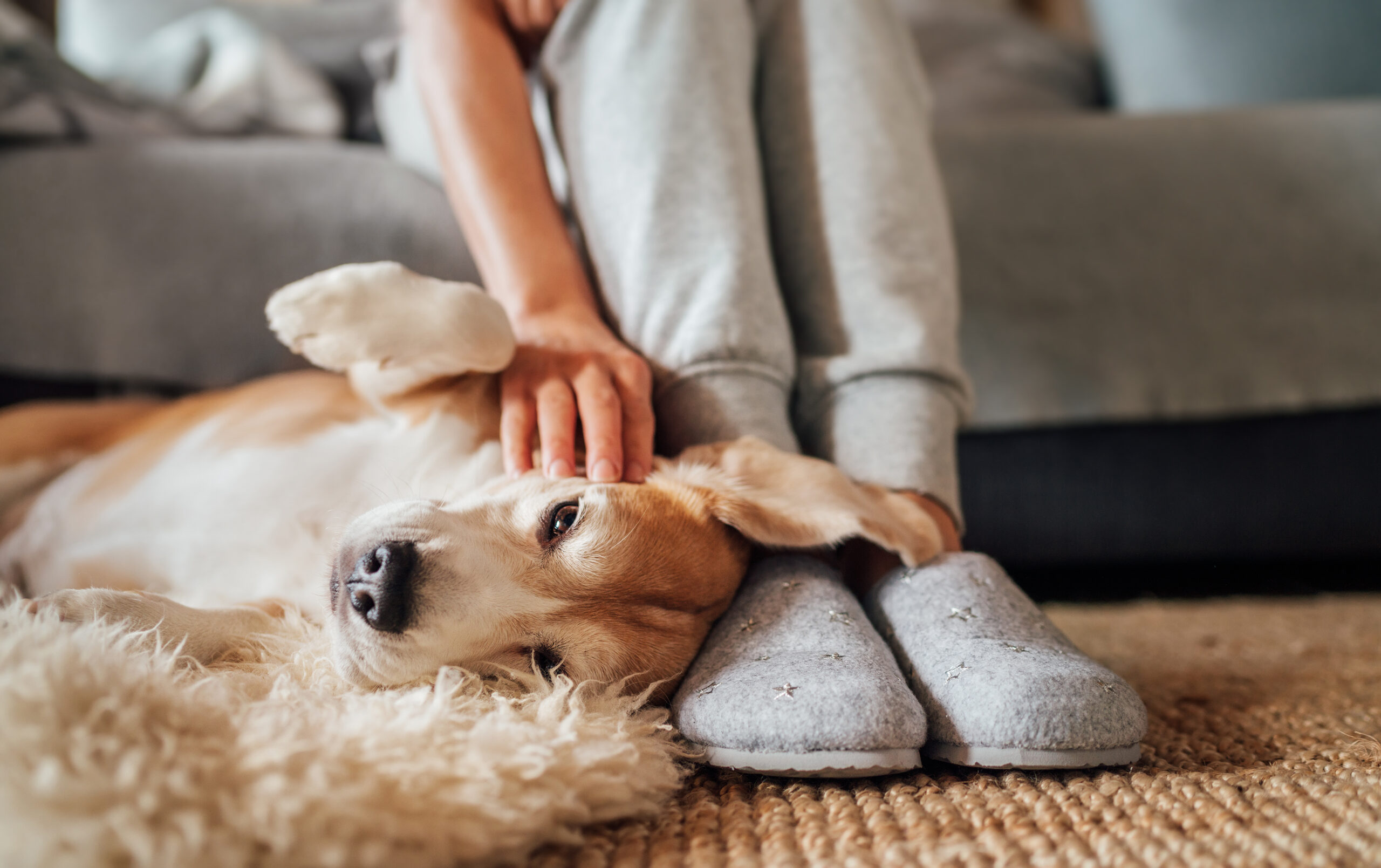 Pets Influence Home Decisions